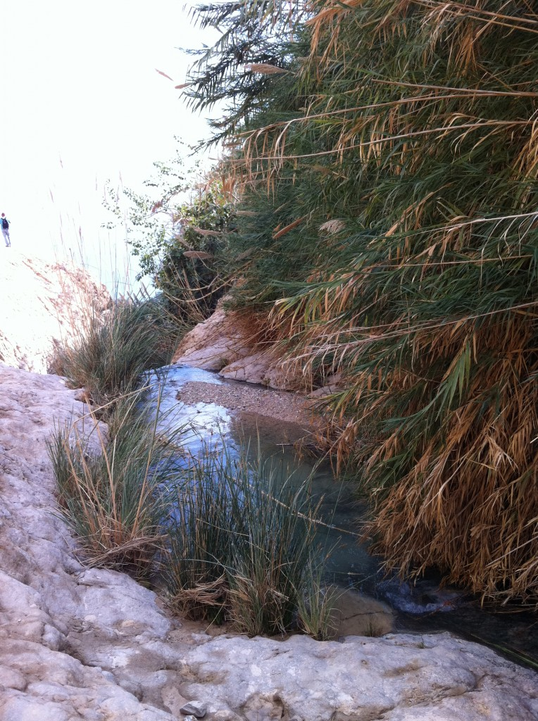 Photo of Nahal David in Judean Desert