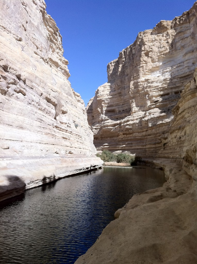 Photo of Avdat Springs - Negev Desert Oasis